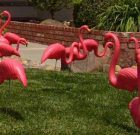 Pink Flamingos – Lawn Decoration